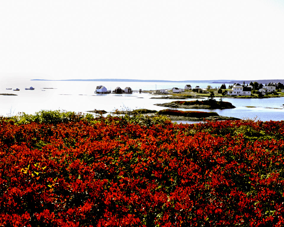 Cranberry Bushes Blue Rocks NS