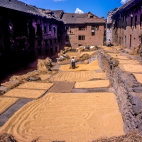 Drying Rice Kirtipur