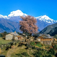 View of Annapurna Nepal