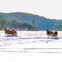 Sleighs Racing on Meach Lake